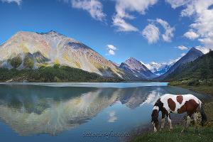 Пейзаж Аккемское озеро у подножия Белухи