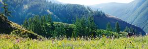 На солнечном склоне Айгулакского хребта. Алтай (6395)