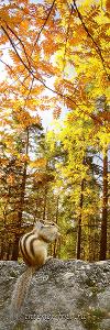 Осень в долине реки Белокурихи. Алтай (7034)