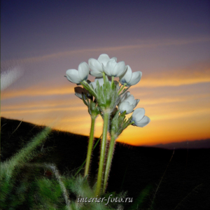 Фото цветов на рассвете