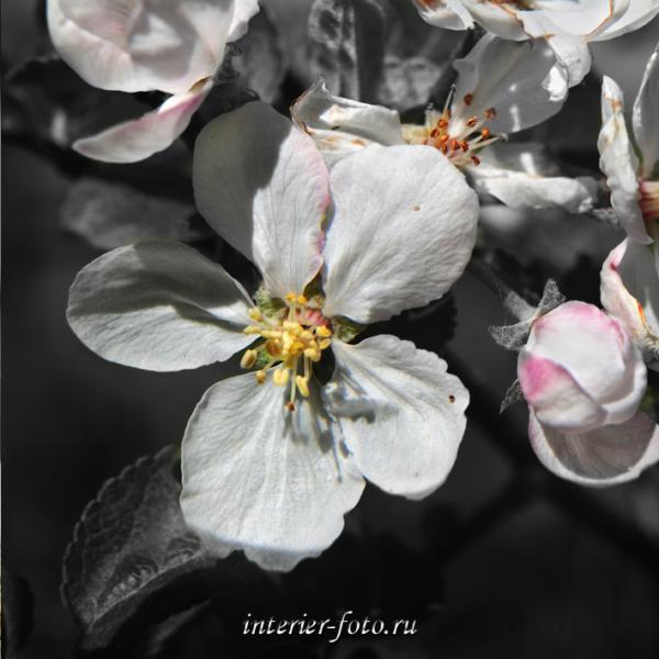 Цветы для диптиха