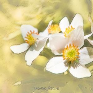 Цветы диптих