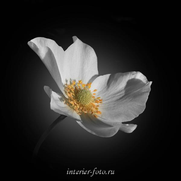 Цветы для триптиха