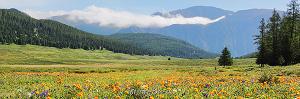 Цветущая долина Одыкташа. Айгулакский хребет. Алтай (6386)
