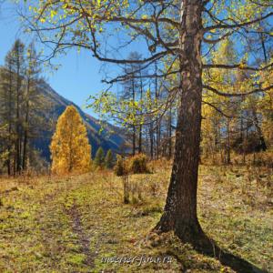 Осень в долине Кулагаша. Алтай (4280)