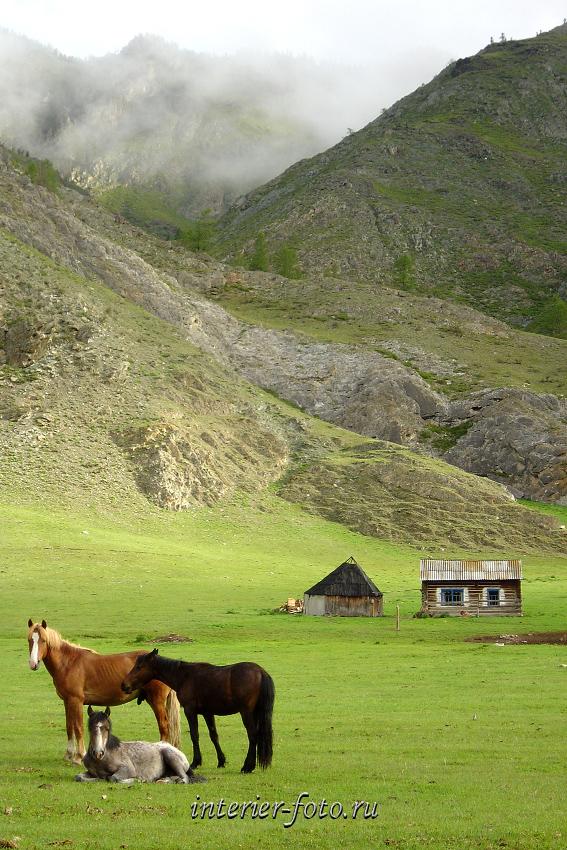 В долине Большого Яломана, Алтай