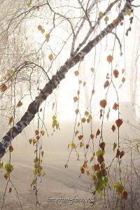 Виды пейзажа Утренний туман Тюнгур