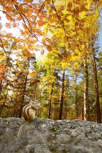 Осень в Белокурихе. Алтай (1199)