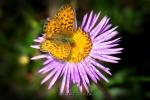 Цветы Алтая
