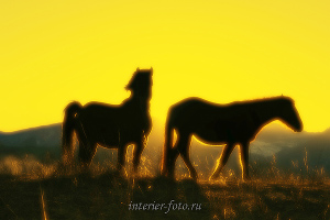 Яркие фотографии Лошади Алтая