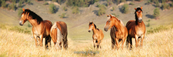 Лошади на Байкале