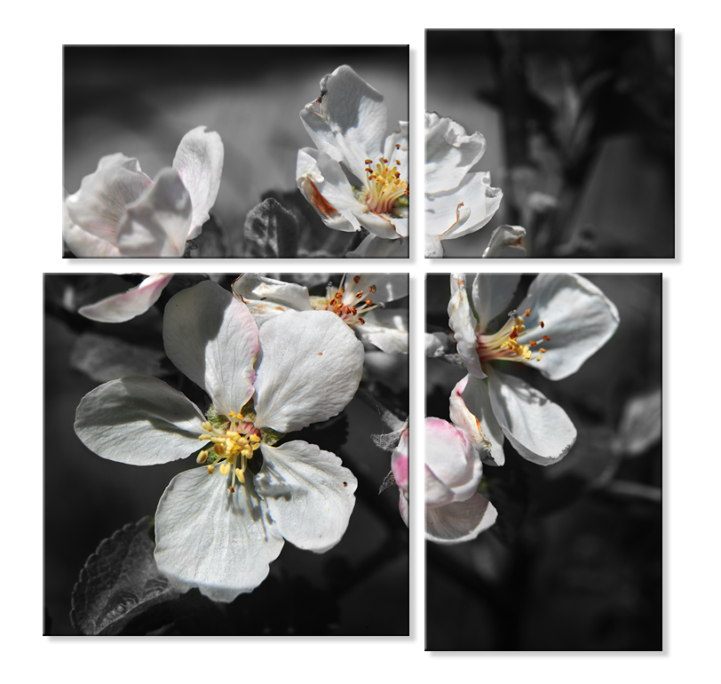 Модульная фотокартина - цветы