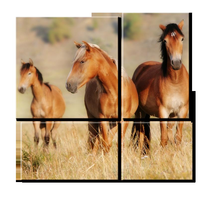 Модульное фото - лошади