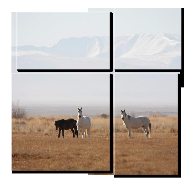 Модульная фотокартина - лошади