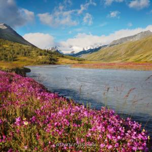 Цветение в долине Тал-Туру (4277)