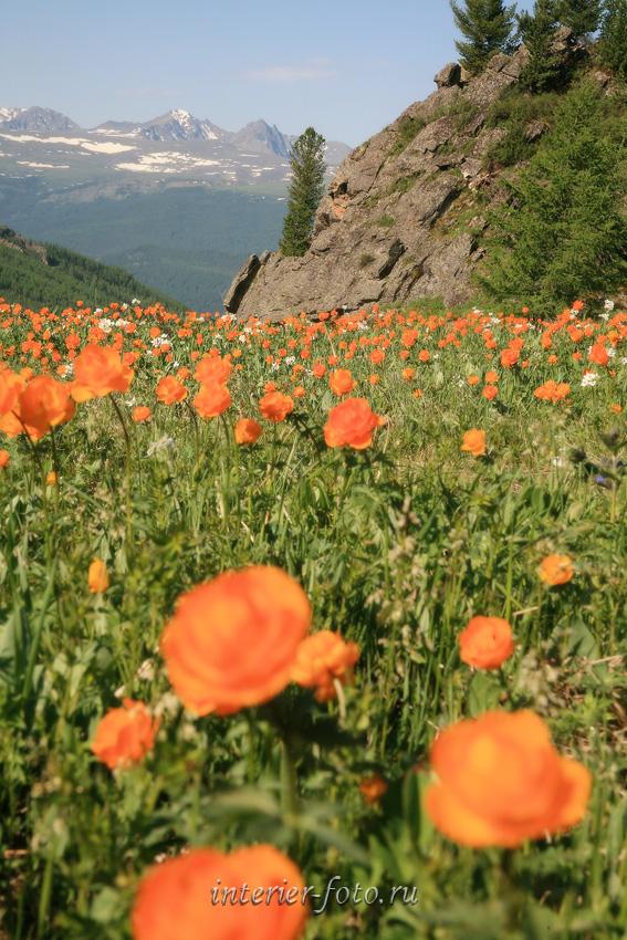 Цветущие горы парка Уч-Энмек