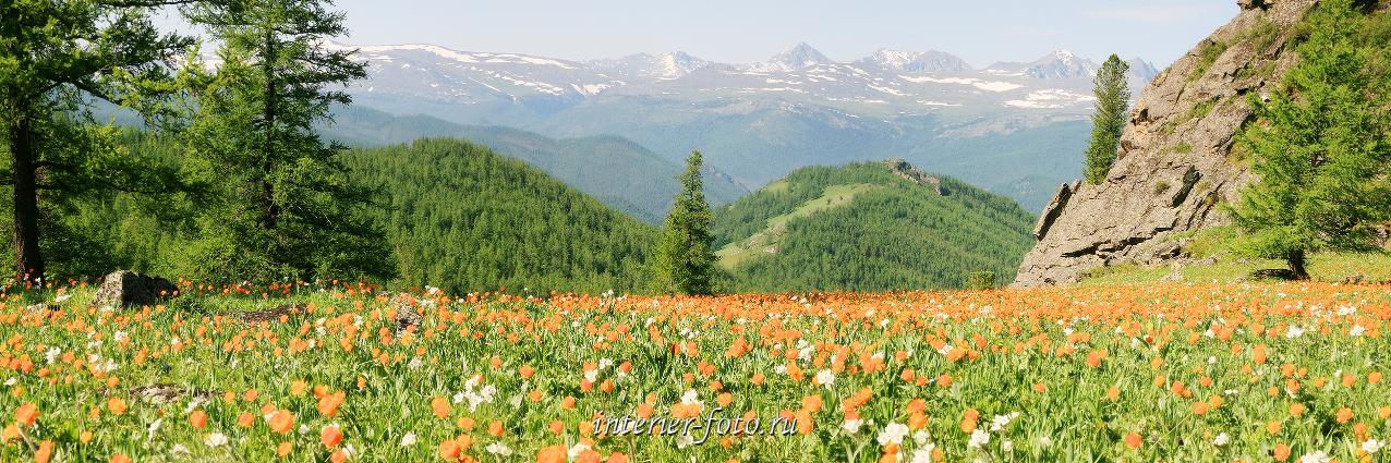 Панорамное фото Алтай парк Уч-Энмек