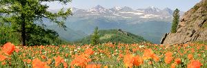 Теректинский хребет, Алтай