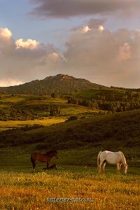 На склонах горы Синюхи в Горной Колывани