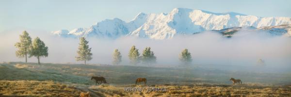 Северо-Чуйский хребет туманным утром