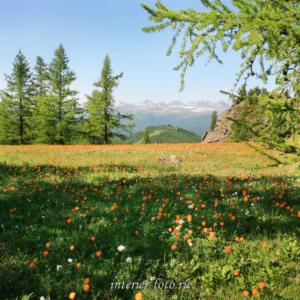Летние пейзажи Цветущие горы в парке Уч-Энмек