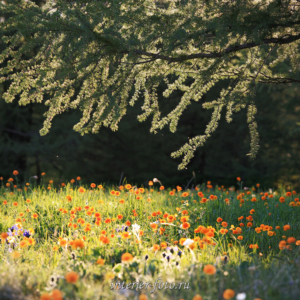 Утром в парке Уч-Энмек