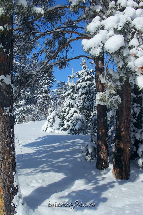 зимний пейзаж картинки книжный формат виды подтягивания