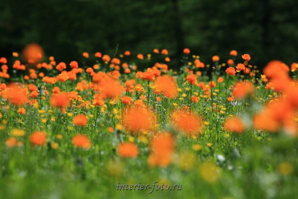 Весна в парке Уч-Энмек