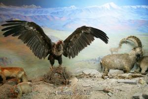 В Баян-Ульгийском музее - Монгольский Алтай