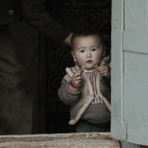 Молодой кочевник - Цэнгэл