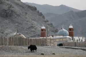 Цэнгэл - Монголия