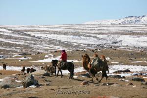 Современные кочевники Монголии