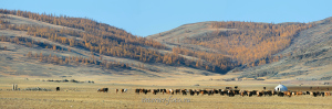 Долина Могойт в Монгольском Алтае