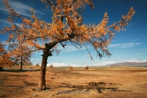 Осень в Монгольском Алтае