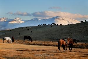 Пейзаж Западной Монголии