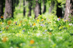 Весна на озере Ару-Кем - парк Уч-Энмек