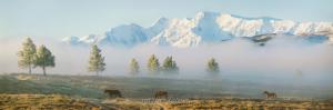 Северо-Чуйский хребет с Улаганского плато