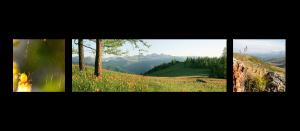 Горизонтальная композиция - панорама и 2 квадрата