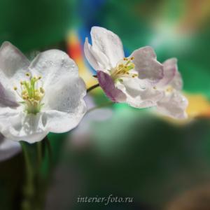 Диптих - цветы Алтая