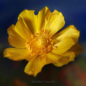 Алтайские цветы