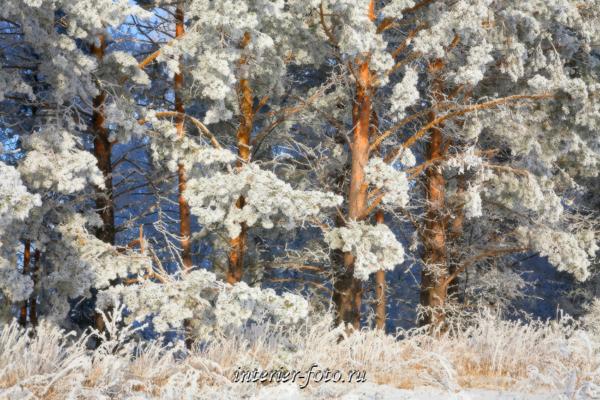Зима в Белокурихе