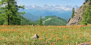 Альпийские луга Алтай