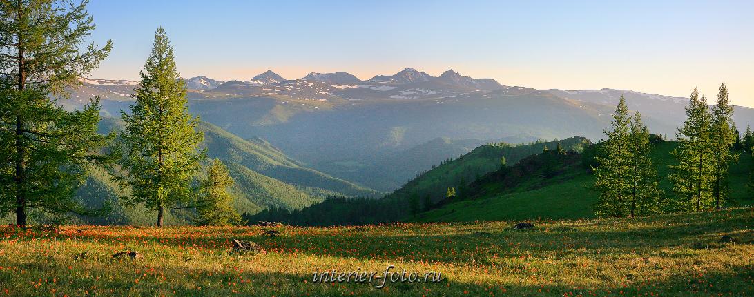 Алтай летом Цветущие горы