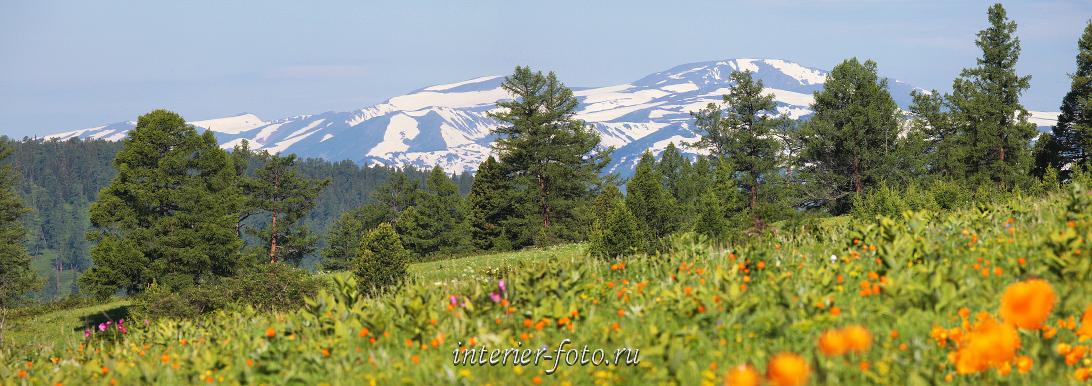 Алтай весной Альпийские луга