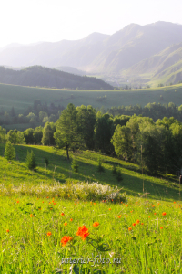 Алтай весной Огоньки