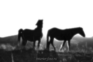 Чернно белая фотография