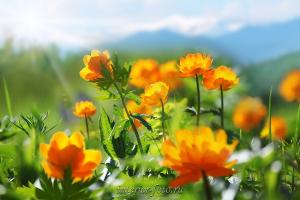 Фото цветов Огоньки