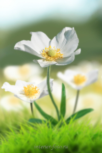 Фото цветов Алтая
