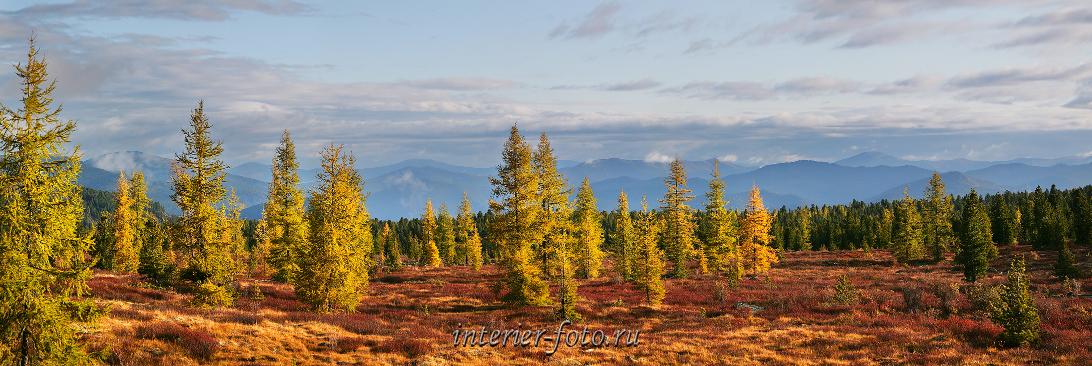 Фото Сибири Тайга