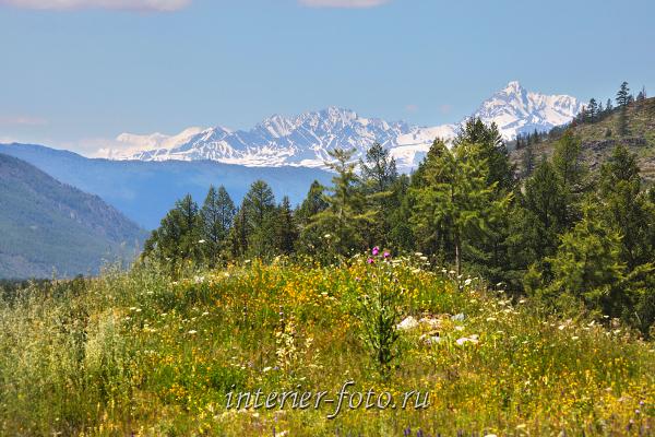 Шенелю и Белуха из долины реки Джазатор. Алтай